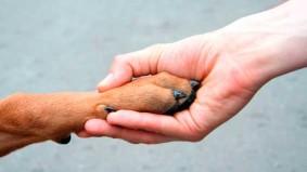 Belo Horizonte institui Política de Proteção e Defesa dos Animais