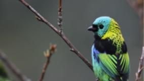 Curso Conexão com a Natureza: Ecologia e Observação de Vida Silvestre