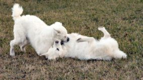 Câmara aprova projeto para controle da natalidade de cães e gatos