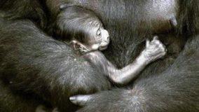 Escolas municipais sugerem nomes para o novo Gorila