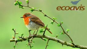 Ecologia e Observação de Aves é a prosa da semana na rádio Ponto Terra