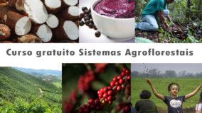 Proteção das florestas e produção agrícola: como compatibilizar?