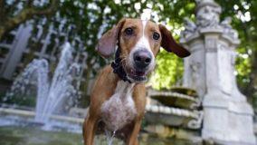 Ativismo pela Defesa dos Animais é destaque no Ecologia e Cidadania