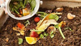 Aprenda a fazer compostagem doméstica em 5 passos