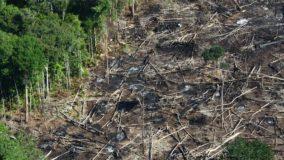 Desmatamento na Amazônia aumenta quase 14% em um ano, afirma governo