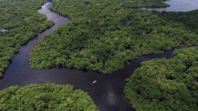 Estudo afirma que aquecimento global afeta desenvolvimento da Amazônia