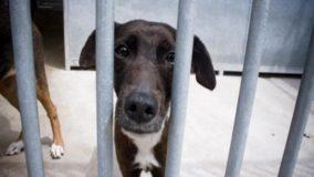 Prefeito de BH veta projeto que proíbe venda de animais nas ruas