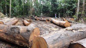Novo sistema detecta 4,5 mil focos de desmatamento em 6 meses