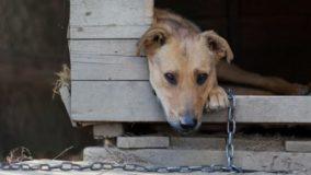 Aumenta denúncias de violência contra animais em Belo Horizonte