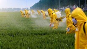 Mais 42 agrotóxicos são aprovados pelo Ministério da Agricultura