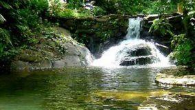 Água é considerada boa em apenas 6,5% dos rios da Mata Atlântica