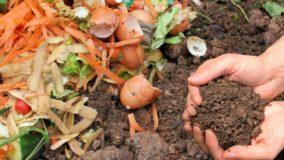 Compostagem de resíduos orgânicos vira lei em Florianópolis