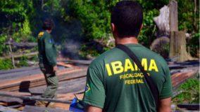 Por demora na digitalização de processos Ibama deixa de arrecadar até R$ 20 bi em multas