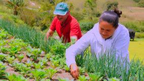FAO lança em maio Década para a Agricultura Familiar