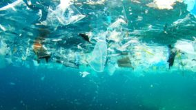 Competição francesa premia atletas por coletarem lixo espalhado pelo mar