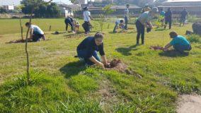 Nova Zelândia vai plantar 1 bilhão de árvores até 2027