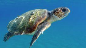 Mais de 1 milhão de espécies estão ameaçadas de extinção no planeta