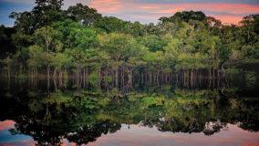 ONG afirma que o Brasil é o país que mais altera leis que deveriam proteger a Amazônia