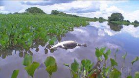 Pantanal tem apenas um fiscal a cada 204 km² para combater crimes ambientais