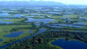 Biodiversidade no Pantanal ameaçada por PLs e 121 hidrelétricas previstas