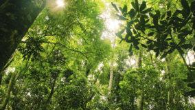 Composto de planta da Mata Atlântica combate Chagas e leishmaniose