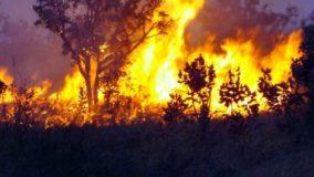 Focos de queimadas no Amazonas são maiores em 22 anos