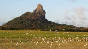 Gaviões são utilizados para afastar garças do Aeroporto de Fernando de Noronha