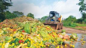 América Latina é responsável por 20% da comida desperdiçada no mundo