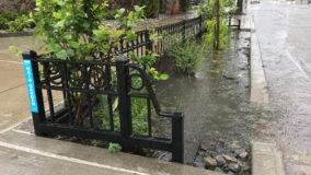 Nova York terá 9 mil jardins de chuva nas calçadas da cidade