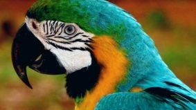 População de animais em florestas cai pela metade desde 1970