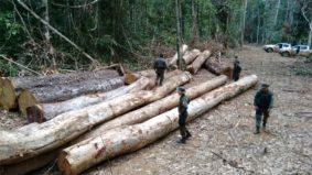 Alertas de desmatamento na Amazônia crescem mais de 5% em outubro