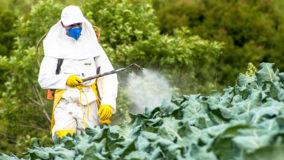 Número de agrotóxicos registrados em 2019 é o maior de série histórica