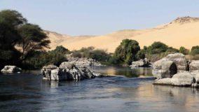 Egito planta floresta no deserto usando efluentes de esgoto