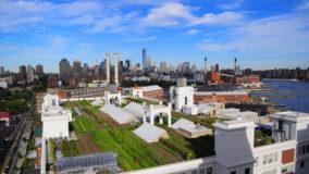 Fazendas produzem alimentos no topo de edifícios em Nova York
