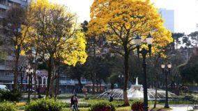 Curitiba terá corredor verde com mais de mil ipês
