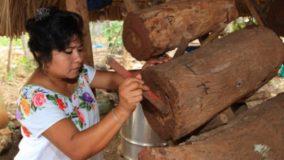 Mulheres maias protegem abelhas da extinção no México