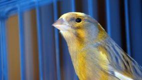Índia proíbe que pássaros sejam engaiolados