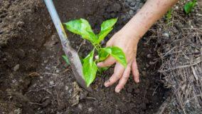 Plataforma propõe o plantio de 4 bilhões de árvores por ano