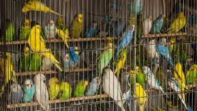 Brasil é um dos maiores mercados para o tráfico de animais no mundo