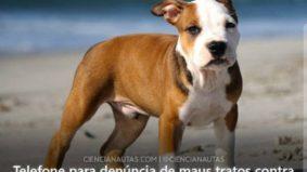 Ibama disponibiliza serviço de denúncia contra maus tratos a animais