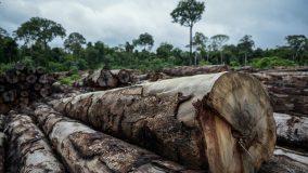 Amazônia Legal perde mais de 3 mil km² no primeiro semestre de 2020