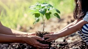 Europa pretende plantar até 3 bilhões de árvores nessa década