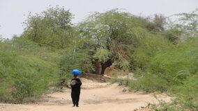 Cientistas descobrem floresta no meio do deserto do Saara