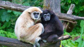 Vietnã cria reserva natural para abrigar 40 espécies ameaçadas de extinção