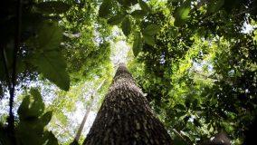 Florestas regeneradas compensaram 12% das emissões por desmatamento na Amazônia