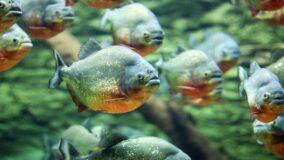 Foco para conservação na Amazônia pode estar na biodiversidade aquática