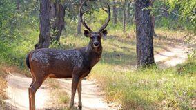 Até 2050 90% dos animais terrestres podem perder seu habitat natural