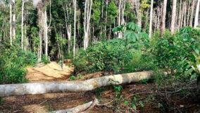 Perda de florestas mais antigas ameaça biodiversidade da Mata Atlântica