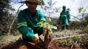 Parceria entre Gil e Sebastião Salgado pretende plantar um milhão de árvores por ano