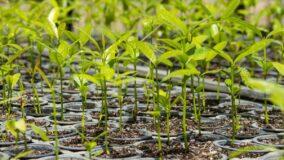 Arábia Saudita plantará 10 bilhões de árvores